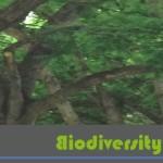 Biodiversity Offsets Blog Logo_hellgruen_Bäume