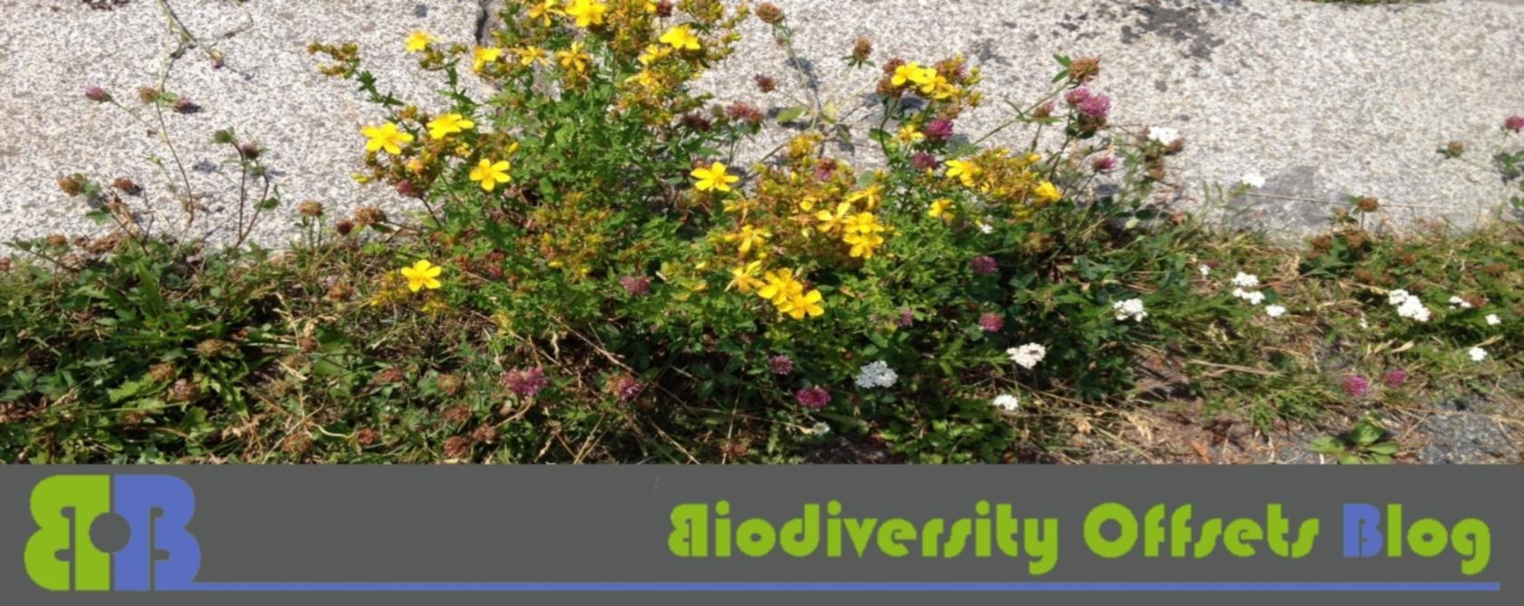 Biodiversity Offsets Blog Logo_hellgruen_blühstreifen_1680
