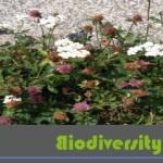 cropped-Biodiversity-Offsets-Blog-Logo_hellgruen_Bordstein2.jpg