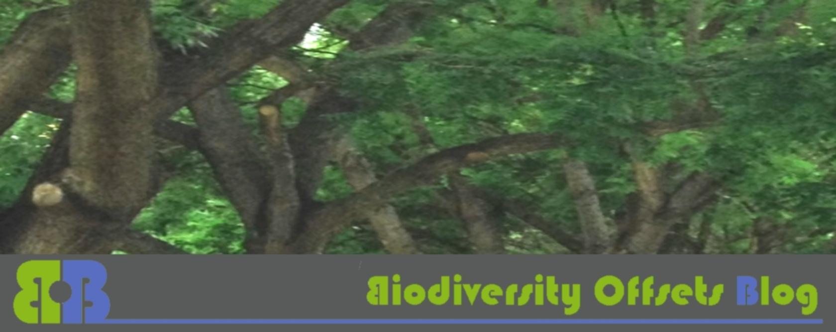 Biodiversity Offsets Blog Logo_hellgruen_Bäume_1680