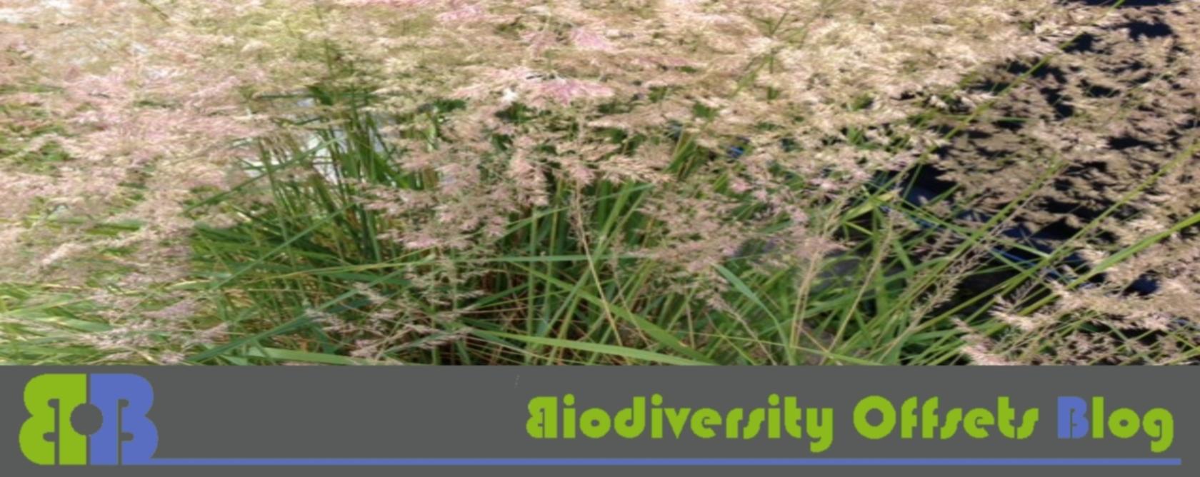 Biodiversity Offsets Blog Logo_hellgruen_Gräser_1680
