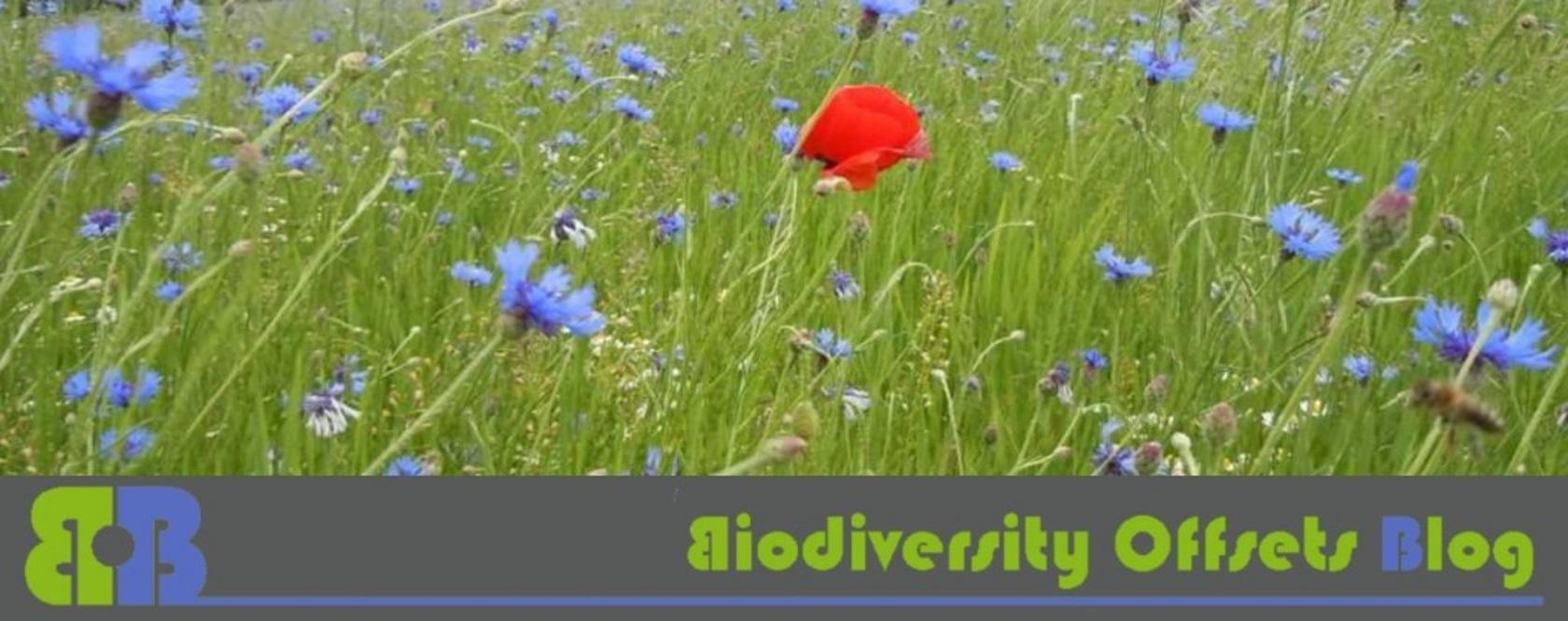 Biodiversity-Offsets-Blog-Logo_hellgruen_Kornblumen-1680x666