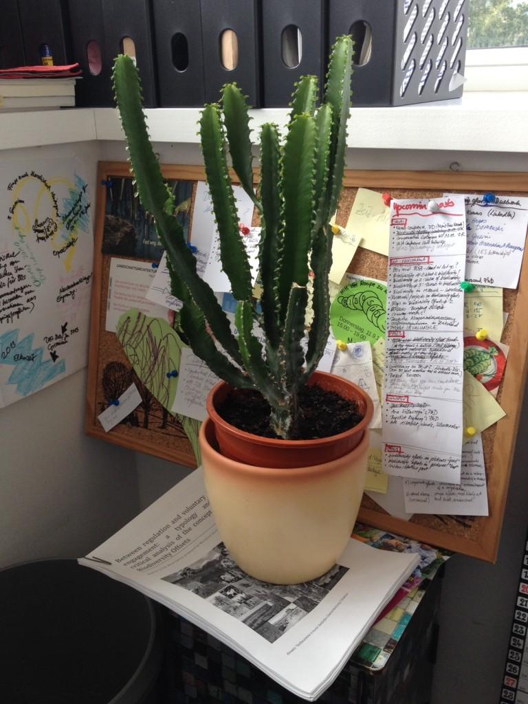 Cactus status post 2